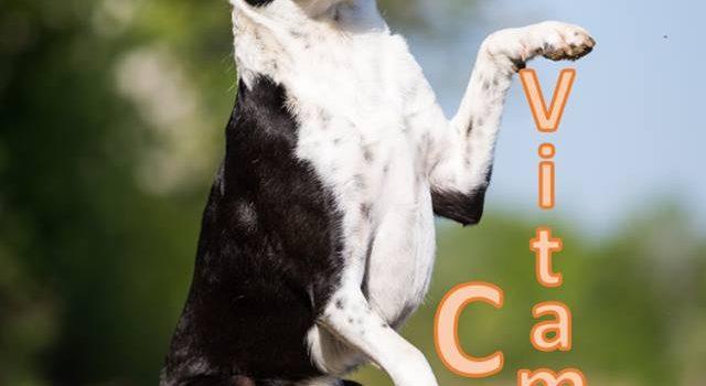 Braucht der Hund eigentlich auch Vitamin C?